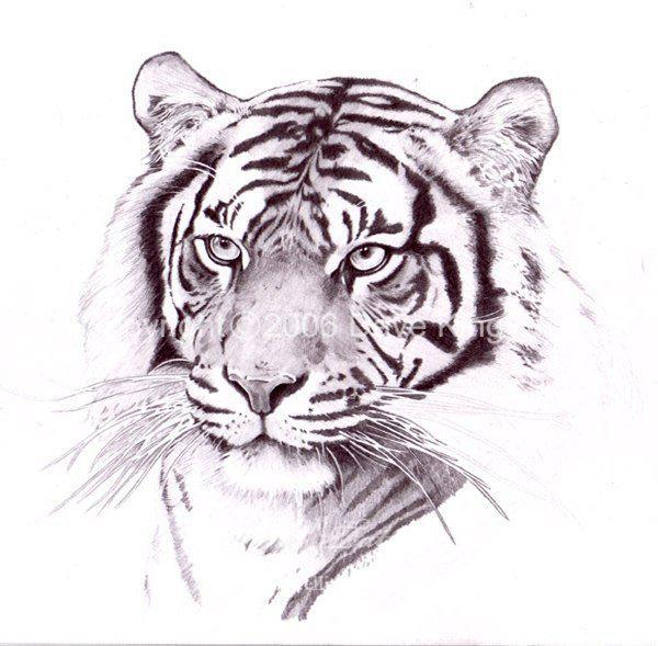 Татуировки тигра эскизы